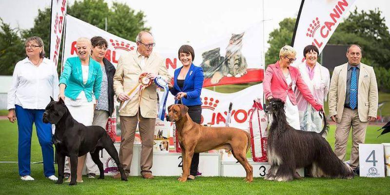 Šķirnes suņu izstāde pulcēs tuvus un tālus viesus